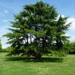 Tree In Clayhall Park — Stock Photo
