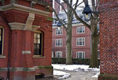 Harvard campus — Stock Photo