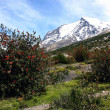 Stock Photo: Torres del Paine
