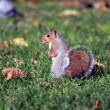 Squirrel — Stock Photo #3733051
