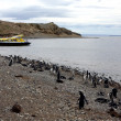 Photo: Magellpenguins on island