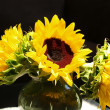 Sunflowers Brightly Lit — Stock Photo