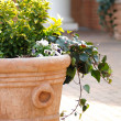 Sunlit Planter — Stock Photo