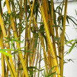 Bamboo forest background. - Stock Photo