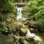 Beautiful Bamboo Border — Stock Photo #3493814