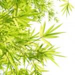 Beautiful Bamboo Border — Stock Photo #3493867