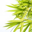 Beautiful Bamboo Border — Stock Photo