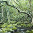 Green forest and river — Stock Photo