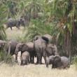 Elefant herd — Stock Photo #2777140