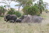 Elefant herd — Stock Photo