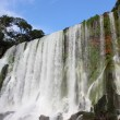 Iguassu waterfall — Stock Photo #2818653