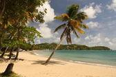Deserted sandy beach — Stock Photo