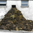 Dung pile — Stock Photo