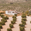 Spanish farmhouse in olive groves - Stock Photo