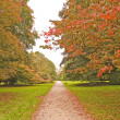 Stock Photo: Tree lined country path