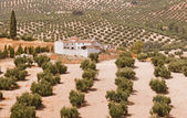Spanish farmhouse in olive groves — Stock Photo