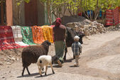 Berber Woman and childs with animals — Stock Photo