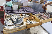 Fish for sale — Stock Photo