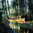 Small creek in a  autumnal forest -  