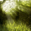 Sunbeams shining through a tree top - Stock Photo