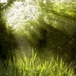 Stock Photo: Sunbeams shining through tree top