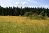 Natural meadows and forest in summer — Stock Photo