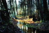 Small creek in a autumnal forest — Stock Photo