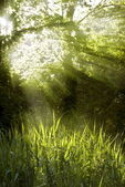 Sunbeams shining through a tree top — Stock Photo