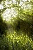 Sunbeams shining through a tree top — Stock Photo