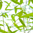 Stock Photo: Bamboo branches in sun