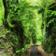 Path throug a small forest canyon — Stock Photo