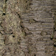 Royalty-Free Stock Photo: Natural Texture - Cherry Tree Bark
