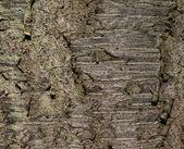 Natural Texture - Cherry Tree Bark — Stock Photo
