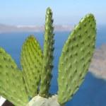 Cactus at the sea — Stock Photo #2777097