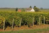 French vineyards — Foto Stock