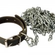 Dog collar with a chain — Stock Photo