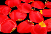 Petals Tulips — Stock Photo
