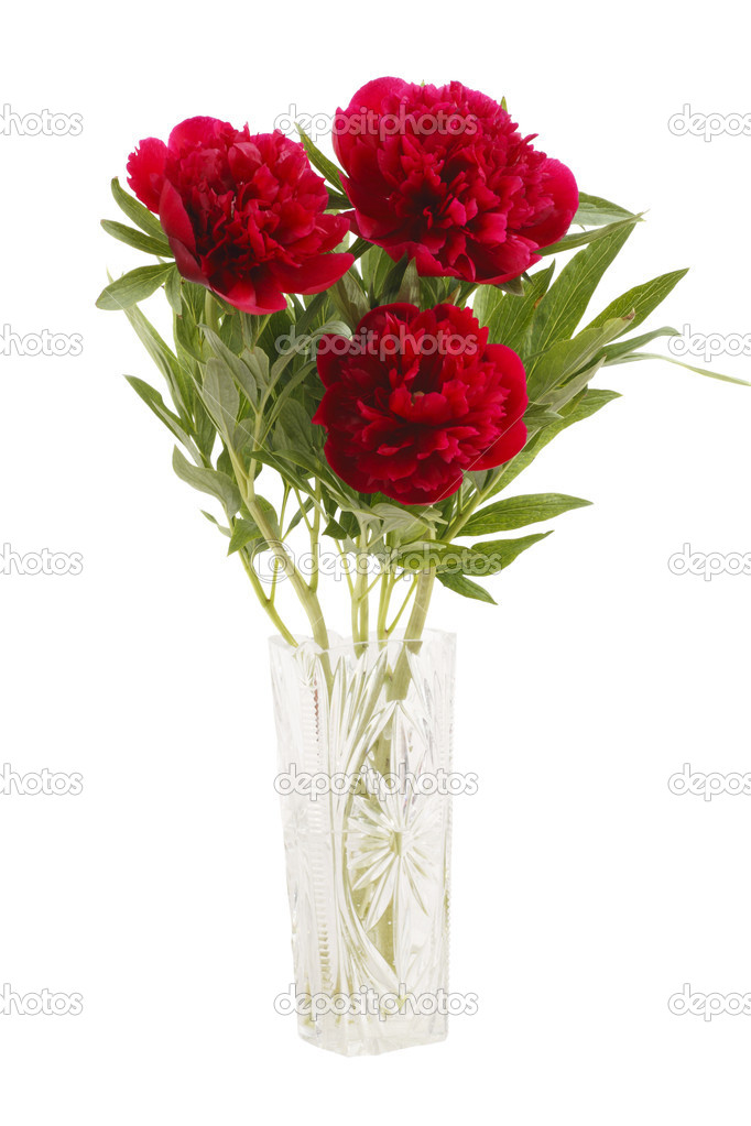 Peonies Bouquet in a glass vase isolated on white background.	 — Stock Photo #3101842
