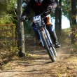 Downhill in forest — Stock Photo