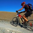 Mountain biker on old road in desert — Stock Photo