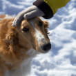Dog head and hand in winter - Stock Photo