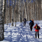 Three man snowshoer climbing in winter birch for — Stock Photo #2707086