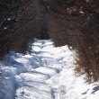 Rural road in winter forest — Stock Photo