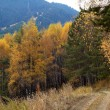 Autumn in mountain forest — Stock Photo