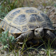 Small tortoise — Stock Photo