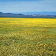 Yellow spring steppe and mountain range — Stock Photo