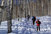 Three man snowshoer climbing in winter birch for — Stock Photo