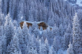 Wooden house in winter mountain forest — Stock Photo