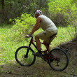 Mountain biker in spring forest — Stock Photo