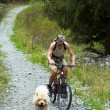 Mountain biker and dog on old rural road - Стоковая фотография